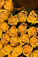 Beautiful floral yellow rose background