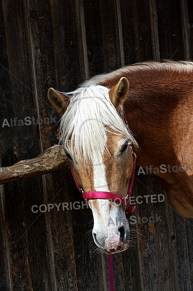 Horse in the front of the stable